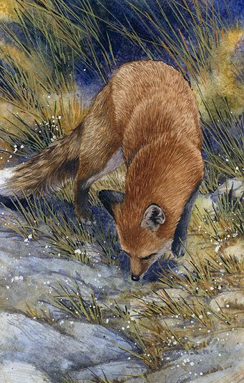 Joe Garcia   WATERCOLOR               Red Fox