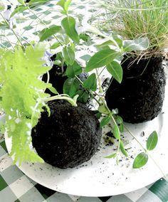 Hacer un kokedama 7Practica un orificio en el centro de la bola de sustrato e inserta con cuidado las raíces de cada planta. Luego vuelve a cubrir con sustrato para que vuelva a tener forma esférica.