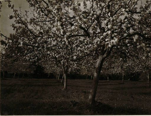 [Untitled] :: Jan Bulhak Collection :: Digital Collections :: University at Buffalo Libraries. Click the image to visit the University at Buffalo Libraries Digital Collection and learn more about the photograph. #ublibraries #polishroom #JanBulhak #Poland