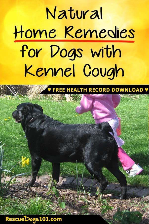 Easy And Natural Home Remedies For Kennel Cough Dog Stuff Puppy