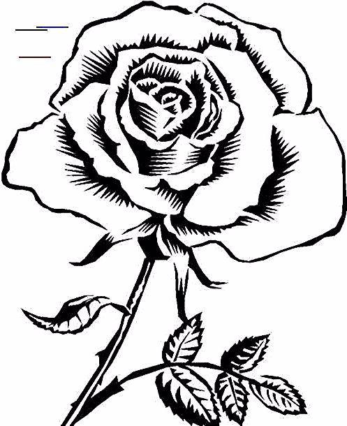 Paling Populer 15 Gambar Bunga Mawar Yg Mudah Digambar Sketsa Bunga Sketsa Gambar Bunga Mawar Merah 6000 Gambar Bunga Rose Wallpaper Wallpaper Wa Wallpaper