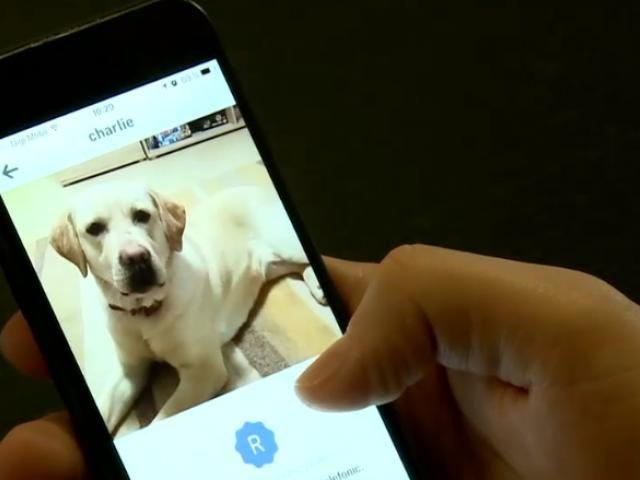O aplicaţie pentru telefonul mobil vine în ajutorul celor care îşi pierd animalele de companie. Aplicaţia a fost lansată de trei tineri din Iaşi. Platforma preia anunţuri cu animale rătăcite şi trimite alerte tuturor utilizatorilor care sunt în zona...
