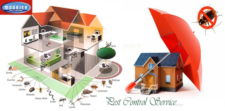 Call @ 9999787571. Mourier Pest Control offers complete range of professional Pest Control Services.