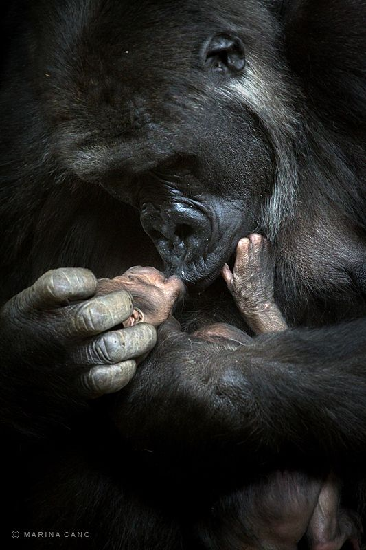 Mother and baby...pure, dear, wow..