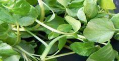 ΑΠΙΣΤΕΥΤΑ ΤΑ ΟΦΕΛΗ ΤΟΥ! Είναι το πιο υγιεινό λαχανικό στον κόσμο κι όμως…κανείς δεν το γνωρίζει!