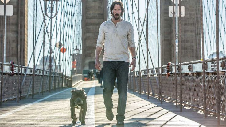 John Wick: Chapter 2 All Ratings,Reviews,Songs,Videos,Trailers,Bookings and News