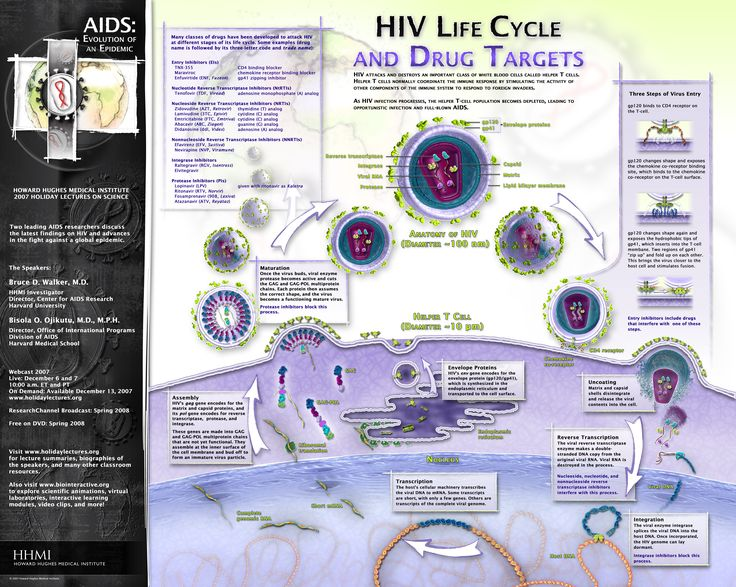 HIV Life Cycle and Drug Targets Poster/Graphic - AIDS: Evolution of an Epidemic - shows each stage of the HIV life cycle and highlights points in the cycle that have been targeted by anti-retroviral drugs.