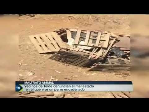 TV Canaria se hace eco de la denuncia en las redes de apacan.org  https://youtu.be/lBgb19xiDiY  8/11/2017 Origen de la noticia:  Enlace original de la denuncia del caso de maltrato animal en Telde:  Asociaciones Protectoras y Albergues de Canarias (APACAN) [www.apacan.org] http://bit.ly/2yIzwx5 Enlace directo a la noticia en este vídeo: https://www.youtube.com/watch?v=UI7e6MLfXK0&feature=youtu.be&t=1217