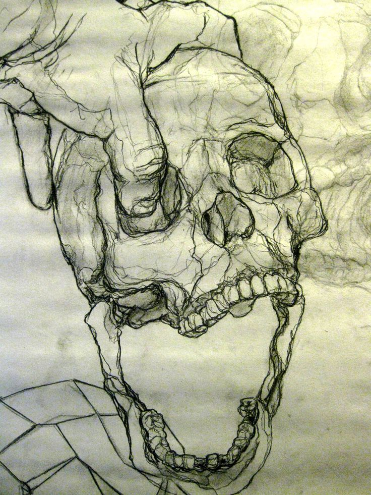 Line Drawing Skull : Skull contour drawing by james grif https facebook