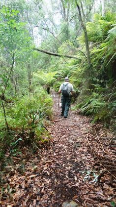 Upper Yarra Track: Section Five: Erica to Walhalla: Gippsland, Victoria, Australia: Ultra Light Hiking, Backpacking.