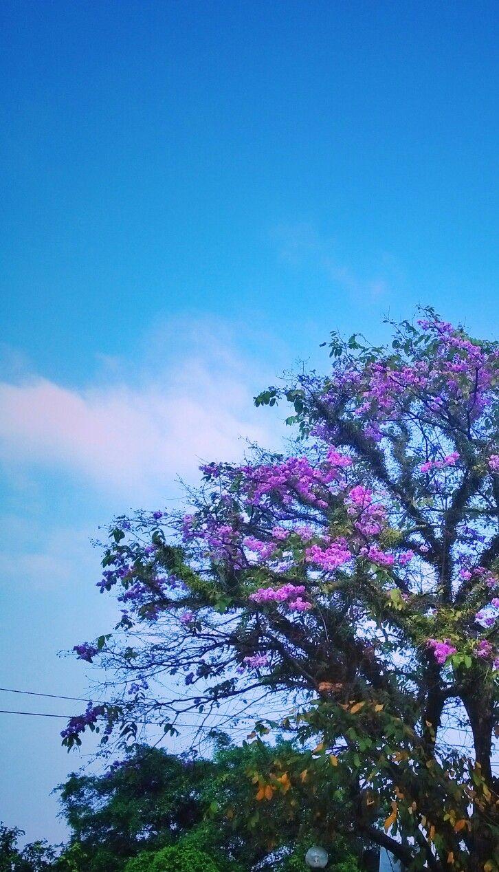 Phonegraphy Nature paintinng on purple tone Taken by WahyuSriHastomo
