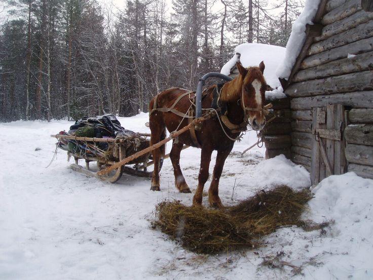 пропеть картинки сани с лошадьми тем менее зале