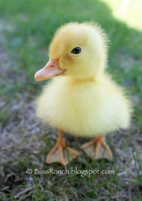 Cute little duckie