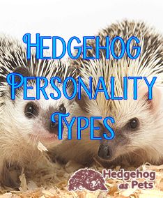 Each hedgehog has its own personality. Understanding your hedgehog's personality helps you take better care of your hedgehog.