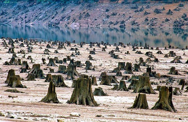 Tysiącletni las, który padł ofiarą budowy nowej tamy w stanie Oregon.