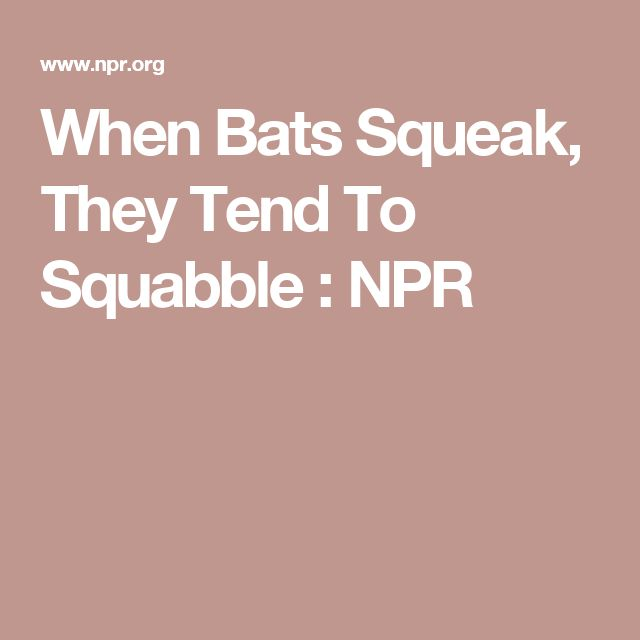 When Bats Squeak, They Tend To Squabble : NPR