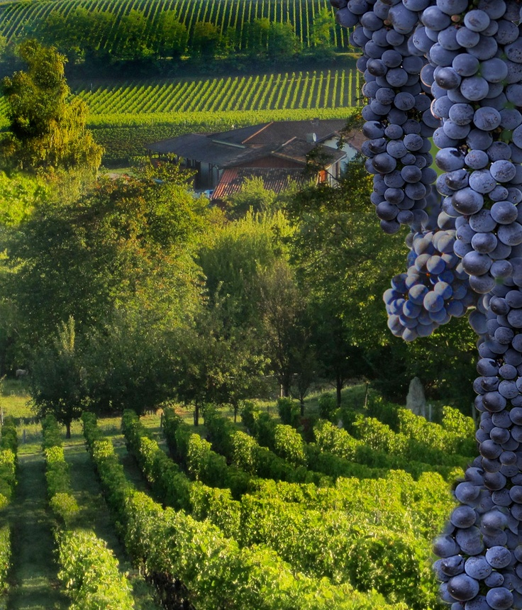 Wine Tasting Notes, Wine Talk, Bordeaux Wine buying advice, winery profiles, wine ratings, images, Bordeaux wine news, Bordeaux wine information by Jeff Leve