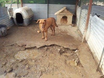 LOUSIEN(Il cane infelice) costretto da sempre a vivere in mezzo al fango della sua cella fatiscente.UN AMORE DI CANE CHE DEVE USCIRE DA LI\'lui e\' LOUSIENun amore di coccole ..... sta in canile da sempre ma non è un cane felice .... lui ha bisogno di correre, di sgambare, di ...