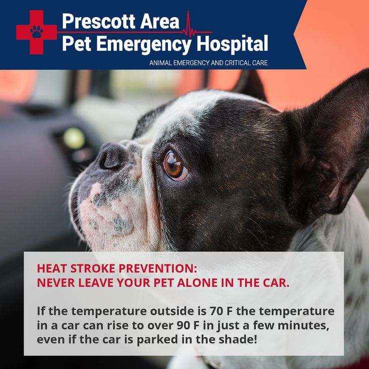Heat stroke prevention: NEVER leave your pet alone in the car. If the temperature outside is 70 F the temperature in a car can rise to over 90 F in just a few minutes, even if the car is parked in the shade! #heatstroke #petemergency