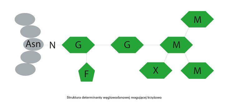 Identyfikacja reakcji krzyżowych (cz. 2: Klasyczne testy serologiczne II) - Alergiczne.info
