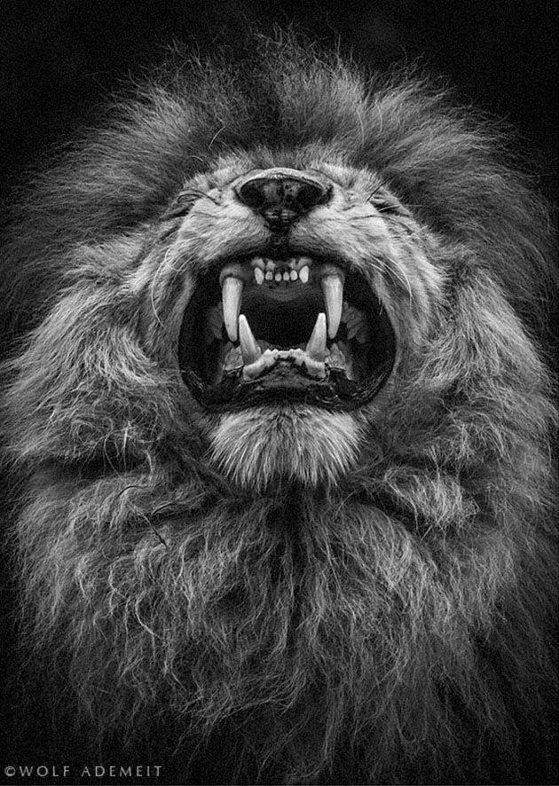 The art of ANIMALS / Wolf Ademeit