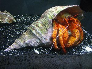 A House for Hermit Crab Craft | Naturally Educational