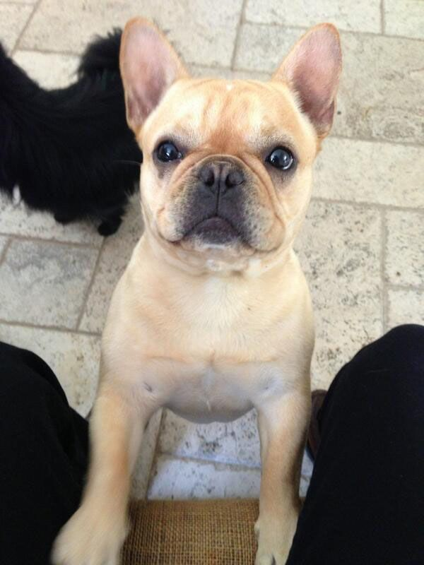 "Hockey player Liam Stewart @ LiamStewart11 tweeted this photo of his dog:  ""Cutest ever? #Stanley"""