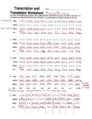 Transcription And Translation Worksheet Key Kidz ...