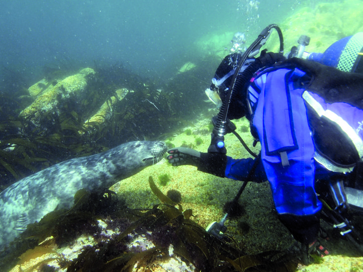 Diving with seals - Tim Allsop Photography