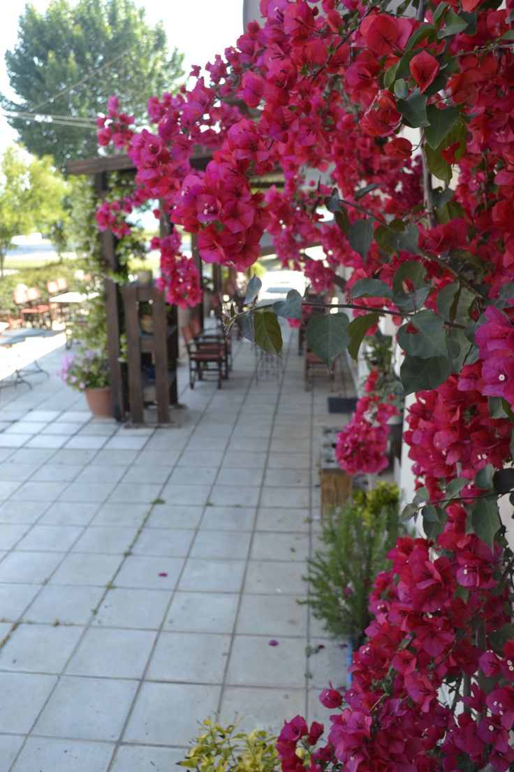 Flowers in our yard !!! #Cafe Pizza Raidos