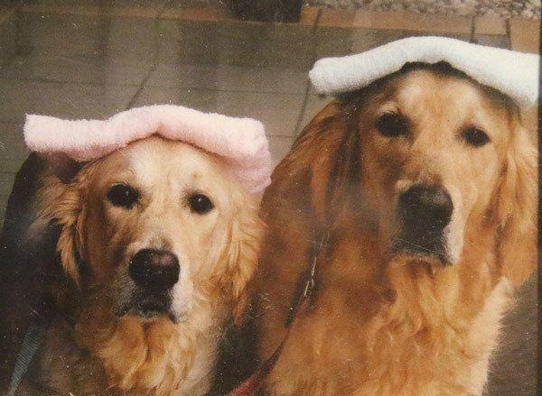 犬も湯船につかったほうがいい 自宅で犬をシャンプーをする際の注意点とは いぬのきもちweb Magazine 犬 いぬ ヴィンテージポスター