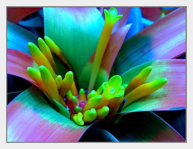 93 Best Flowers Images On Pinterest