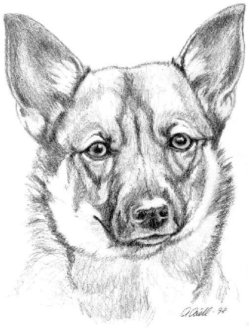 tegning dyr - Google-søgning