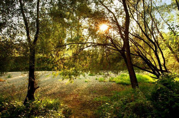Naturparadies an der Amper / 11591812