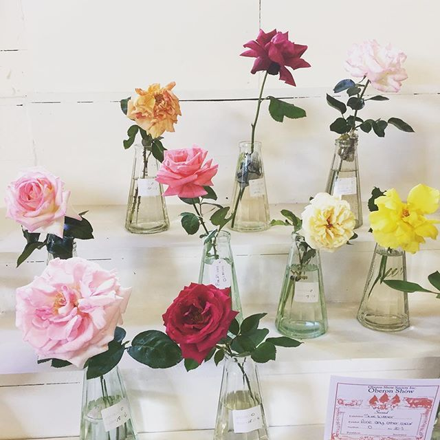 Love these roses that were on display at this years Oberon Show. . . . #arcardiantraders #vintagewares #vintageshop #instashop #countryshow #oberonshow #countrylife #countrystyle #slowliving #roses