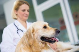 In dogs, certain diseases can lead to production of excess liver enzymes, causing considerable discomfort to the canine. Here is an overview of the causes and symptoms of elevated liver enzymes in dogs, and dietary changes that can help it to recover from this condition.