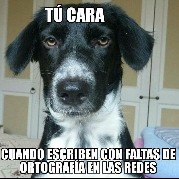 Un poco de humor sábado por la noche 😂😂😂  #PetsWorldMagazine #RevistaDeMascotas #Panama #Mascotas #MascotasPanama #MascotasPty #PetsMagazine #MascotasAdorables #Perros #PerrosPty #PerrosPanama #Pets #PetsLovers #Dogs #DogLovers #DogOfTheDay #PicOfTheDay #Cute #SuperTiernos