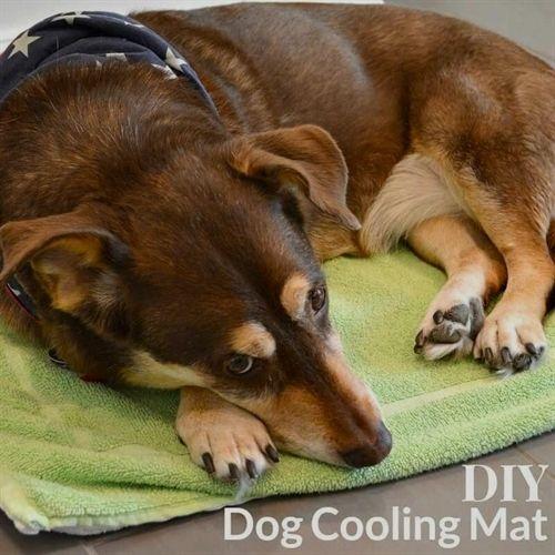 Dog Training Dallas Molasses Creek Dog Training Quakertown Dog