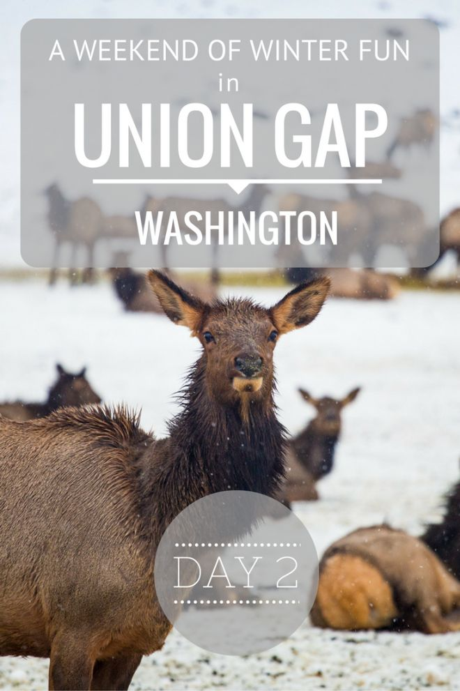 Day 2 of our visit to Union Gap in Washington state, just a couple of hours from Seattle. We spent much of the day outdoors, snowmobiling for the first time and visiting the local wild Elk population!