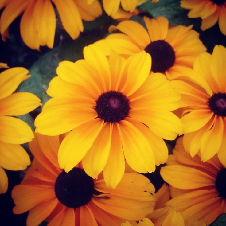 Waiting for my sister at the airport and saw these flowers so cute! #yellowflower #yellowflowers #beautiful #organic #life #lifesbeautiful #lifesbeauty #pretty #prettyplants #prettyplant #natural #zoomin #zoom #closeup #closeups #potrait #cuteness #cute #adorable #flower #flowers #yellow #nature #naturelovers #naturesbeauty #naturesbeautiful