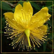 Resultado de imagen para las flores mas exoticas del mundo