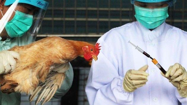 H7N9 bird flu epidemic in China worst since 2013