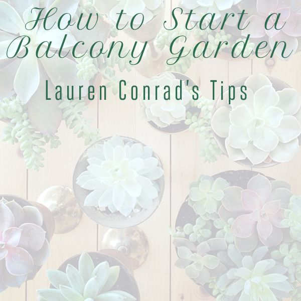 Green Thumb: How to Start a Balcony Garden