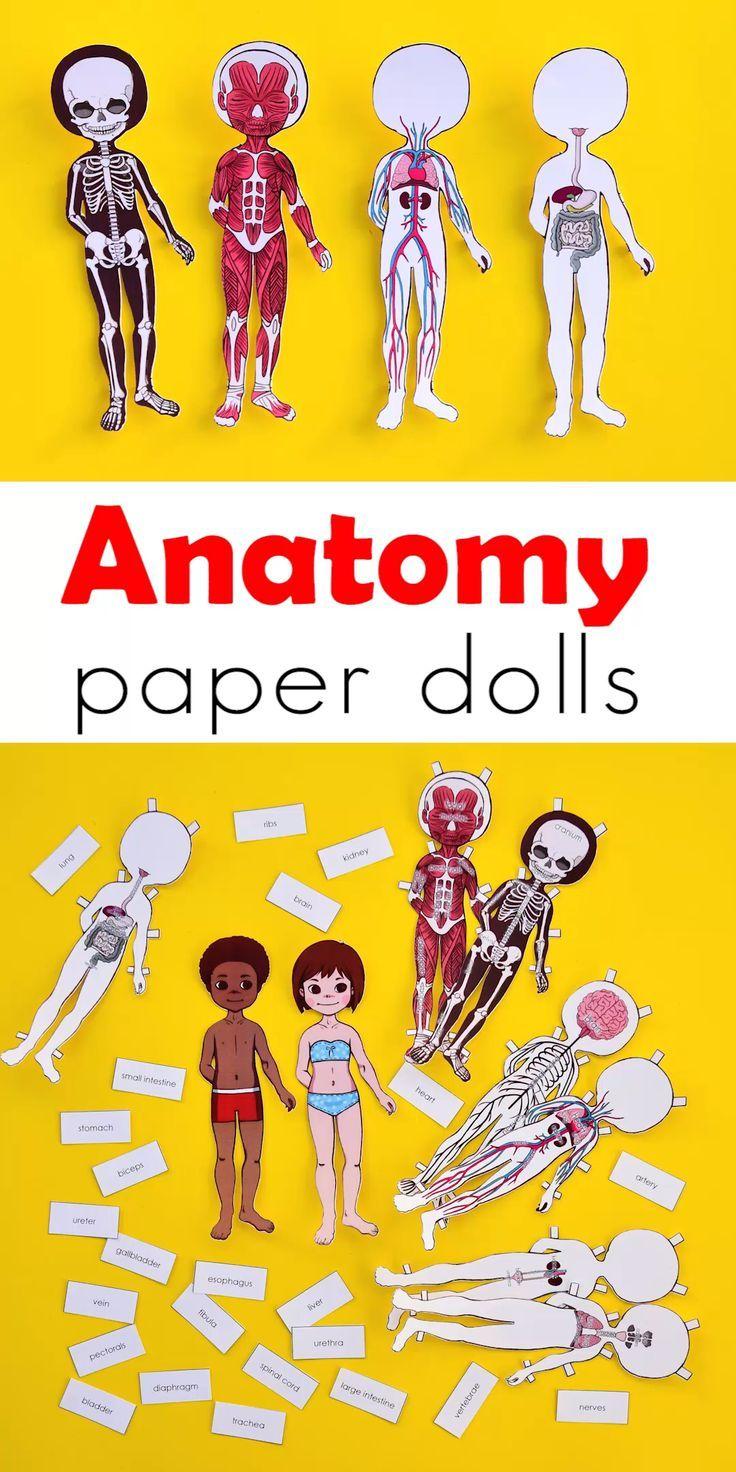 Anatomy Printable Paper Doll For Kids Human Body Activities Human Body Anatomy Paper Dolls [ 1472 x 736 Pixel ]
