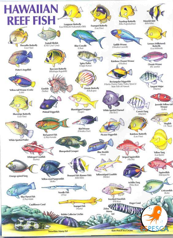 10 best fish identification images on pinterest tropical for Types of fish in hawaii