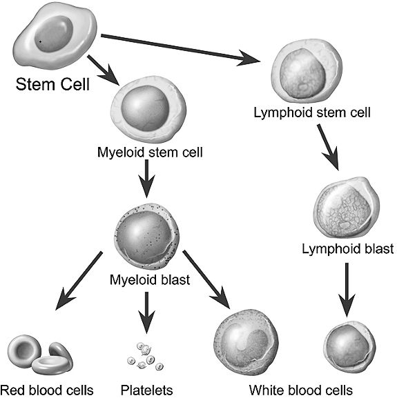 What Is Stem Exactly: 1000+ Images About Stem Cells On Pinterest