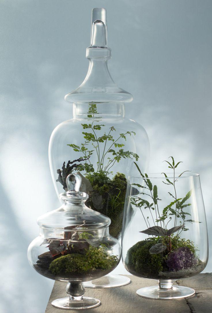 Aleseid, Auloniad and Balanos: Three 'Dryad' Terrariums.