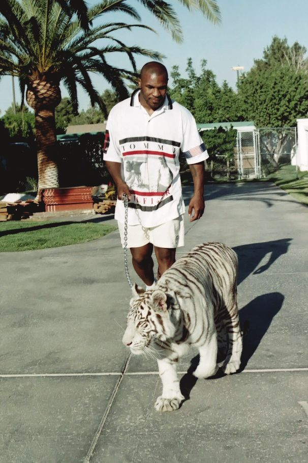Legendary mike tyson and a tiger hollah