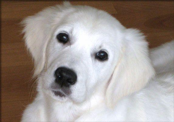 Good Dog Breeders In Nj
