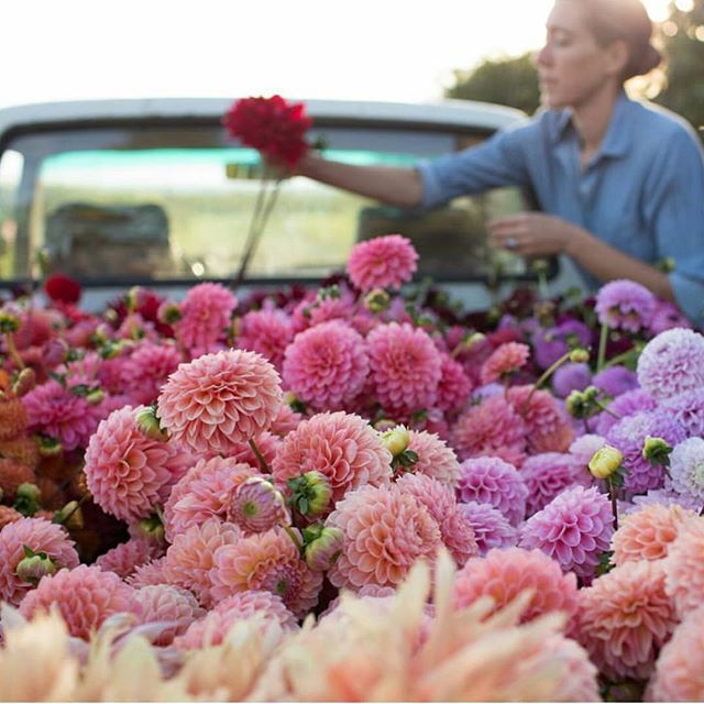 Sundays are for flowers! repost by @floretflower 💟🏵 #sunday #happiness #flowers #love #pink #weekend #amazing